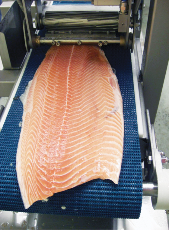 Photo of fish on the Ryco Single Lane Table Top Pin Bone Remover Machine